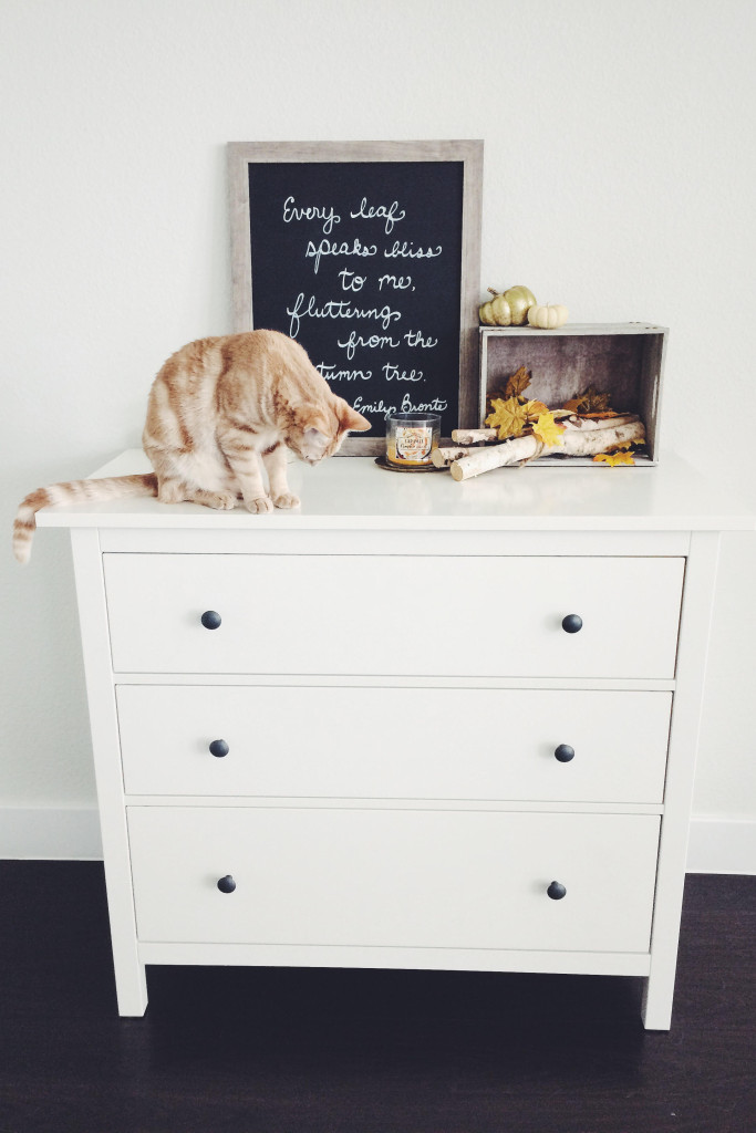 Cute orange cat sitting on top of white dresser with autumn decor on it