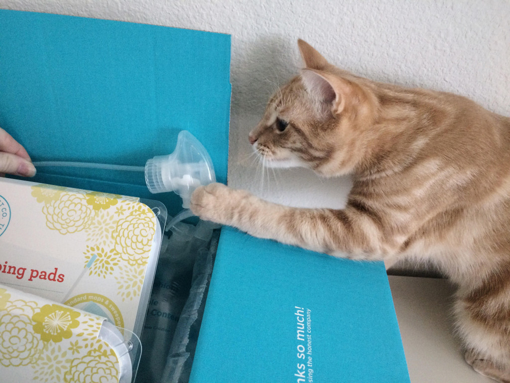 Orange cat playing with plastic sprayer top inside box