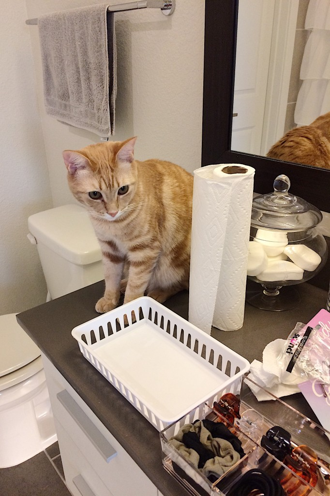 Orange cat looking on during drawer organization with clutter on the counters