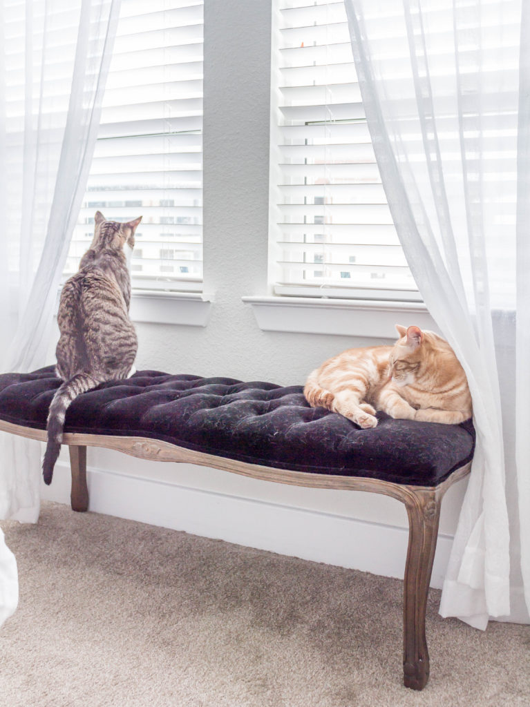 grey and black striped and orange cats on black velvet bench